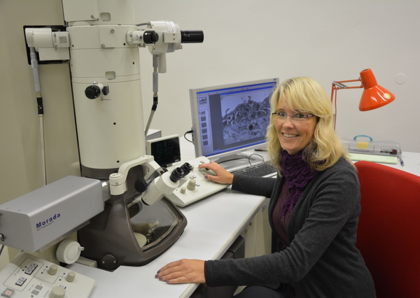 Elektronenmikroskopie: Institut für Anatomie